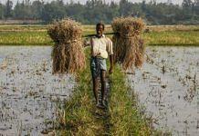 Farmer in a field   Prashanth Vishwanathan   Bloomberg