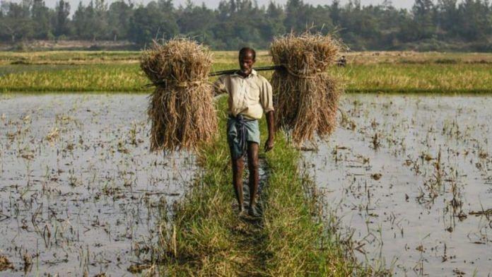 Farmer in a field | Prashanth Vishwanathan | Bloomberg