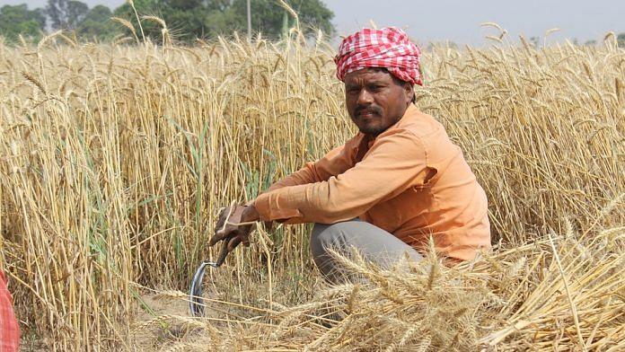 A farmer in a field in Punjab