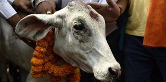 Latest news on cow vigilantism | ThePrint.in