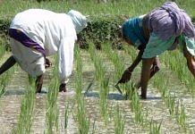 Farmers working in a rice paddy field in Karnataka | Wikimedia Commons