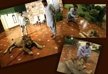Shahid Afridi shared pictures of a lion inside his home | @kya_msla | Twitter