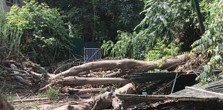 The government had approved felling of 16,500 trees in the city for revamping south Delhi | Shahbaz Ansar