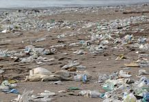 Plastic pollution near sea