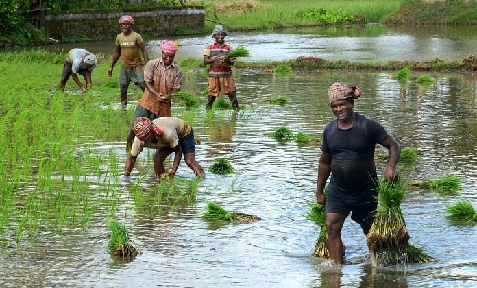 Farmers plant paddy saplings as monsoon rains fill their fields, at a village in West Bengal | PTI