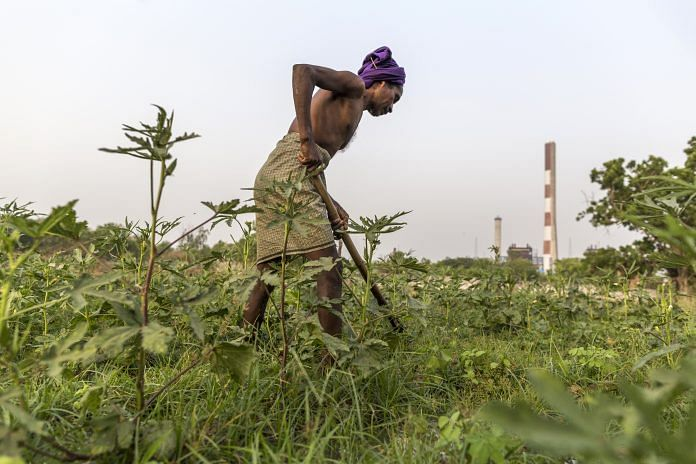 A farmer labors on a field in Bana village in the district of Latehar, Jharkhand | PTI