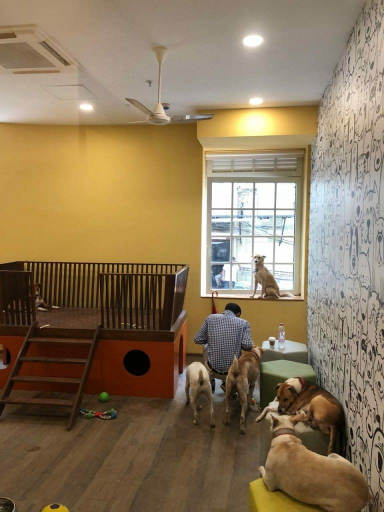 The new room for stray dogs at Tata's Bombay House