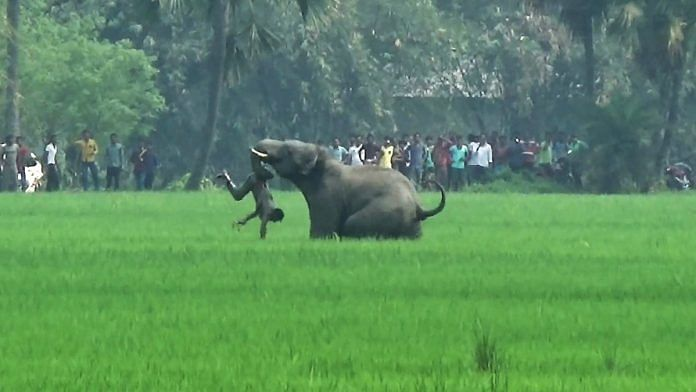 An elephant attacks a resident in a field in Burdwan district of West Bengal | AFP/Getty Images