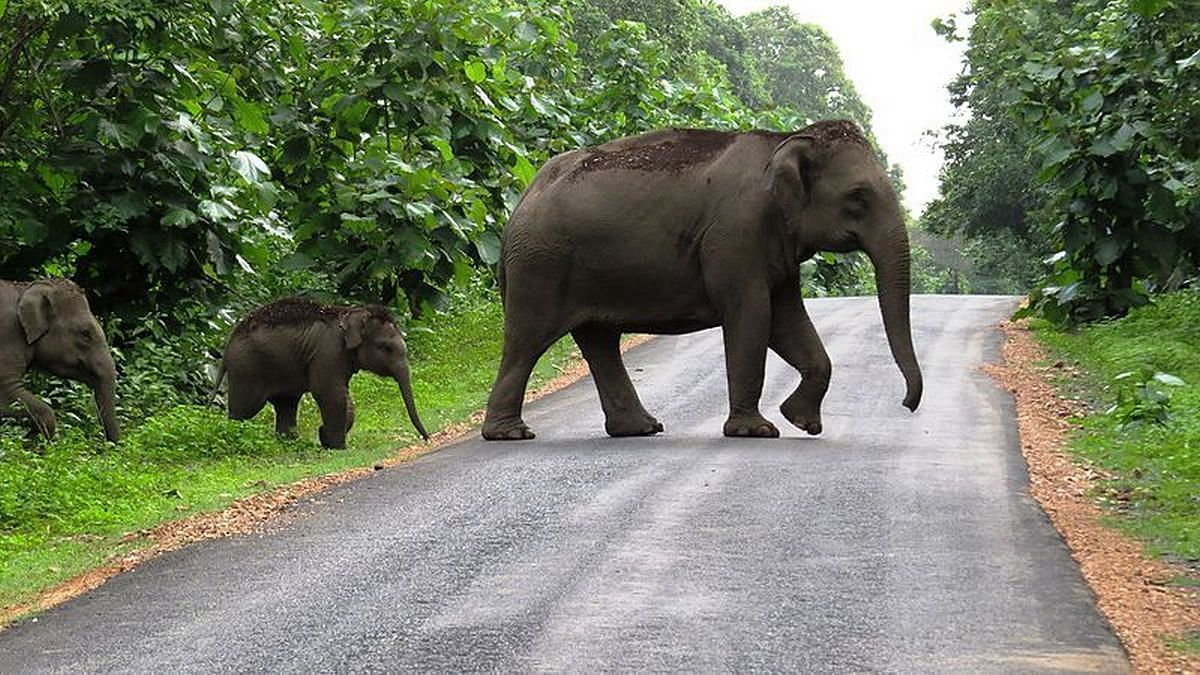 Elephants crossing a road | Commons