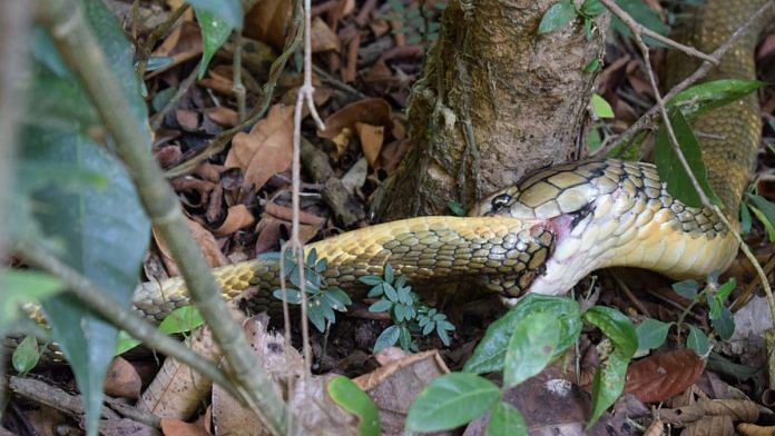 Representational image of a snake   Ajay Giri