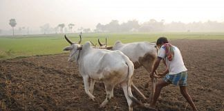 A farmer ploughing with cattle (Representational image)