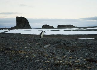 A penguin stands behind a plastic bottle on Greenwich Island, Antarctica | Isadora Romero/Bloomberg