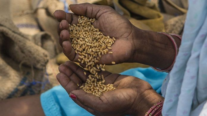 Representational image for wheat | Photo: Bloomberg