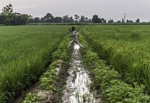 A farmer jumps over an irrigation channel between fields of rice growing on farmland in the Bhagpat district of Uttar Pradesh | Bloomberg