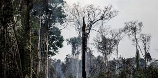 A tree sits on fire in the Amazon rainforest in Porto Velho, Rondonia state in Brazil on 25 August.