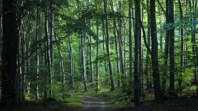Forests | Representational Image | Commons