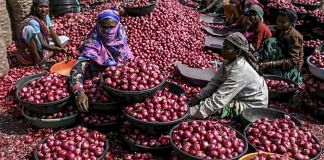 Workers sort onions at the Agriculture Produce Market Committee wholesale market in Lasalgaon, Maharashtra | Dhiraj Singh/Bloomberg