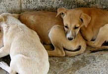 Indian dogs | Flickr