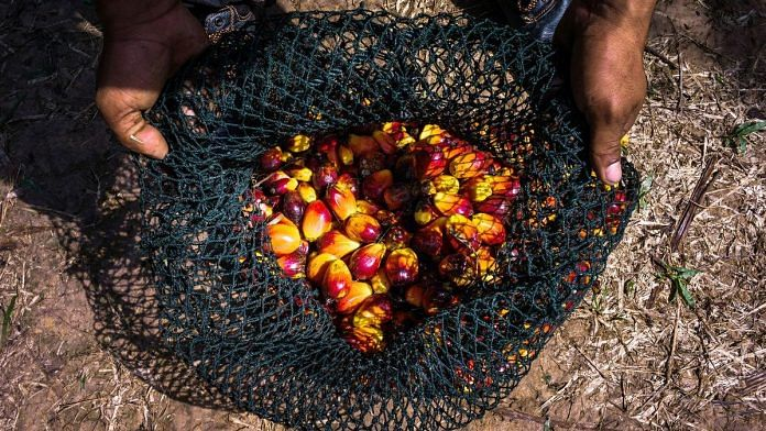 A net of harvested oil palm fruit | Photographer: Sanjit Das | Bloomberg