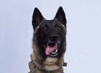 Conan, the Belgian Malinois, who chased ISIS leader Abū Bakr al-Baghdadi.