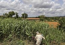 A farmer working in a field | Representational image | Dhiraj Singh | Bloomberg