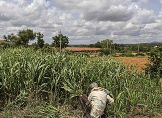 A farmer working in a field | Representational image | Dhiraj Singh | Bloomberg