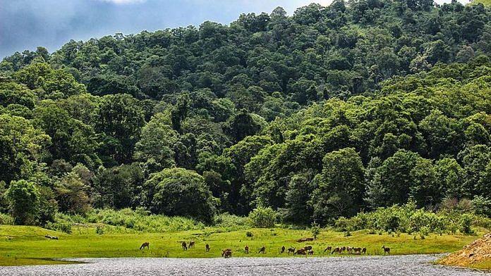 Periyar Tiger Reserve | Representational image | Commons