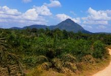 Representational image of an Indonesian palm oil plantation