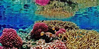 Coral reef ecosystem underwater