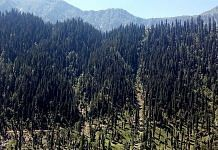 Forest in Kashmir