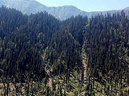 Forest in Kashmir