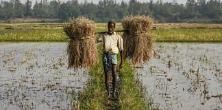 Representational image for Indian agriculture | Photo: Bloomberg