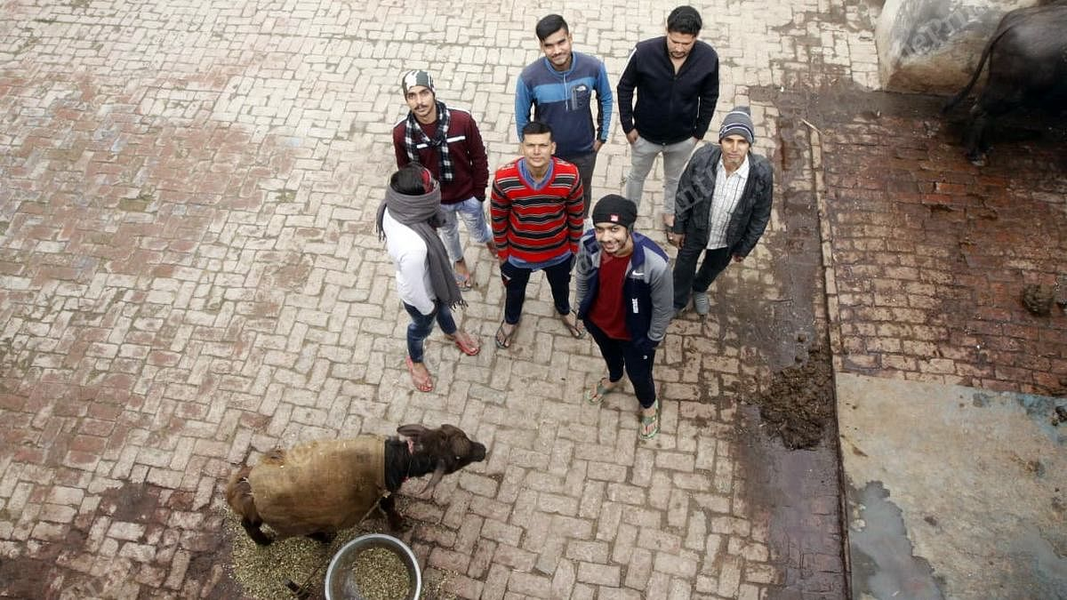 Shashank Tyagi (front, in black cap and red sweater) with his friends and a buffalo at Bhainara village | Photo: Praveen Jain | ThePrint