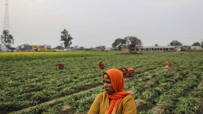 A labourer takes a break at a green peas field in Amritsar, Punjab| Dhiraj Singh/Bloomberg