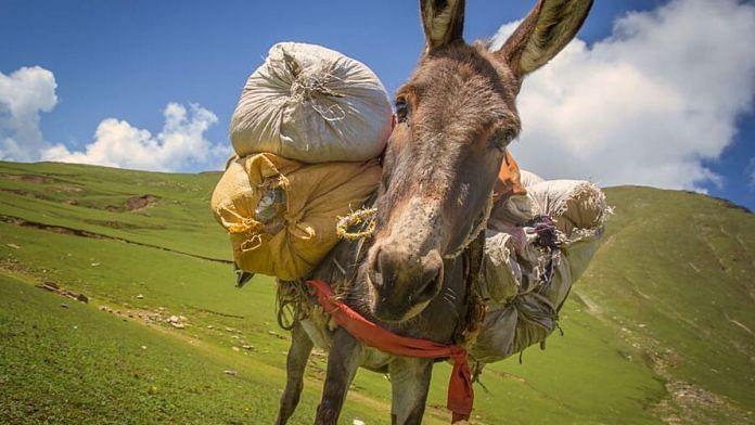 A donkey on a mountain   Representational image