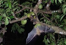 Representational image of bats | Photo | Pexels