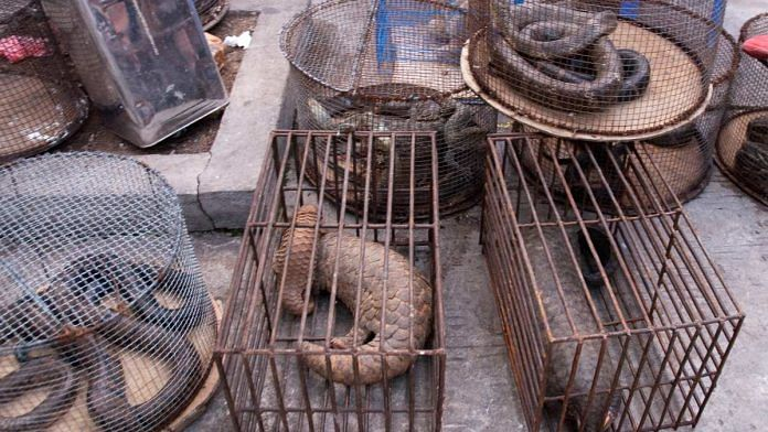 Illegal trade of pangolins (representational image) | Photo: Commons