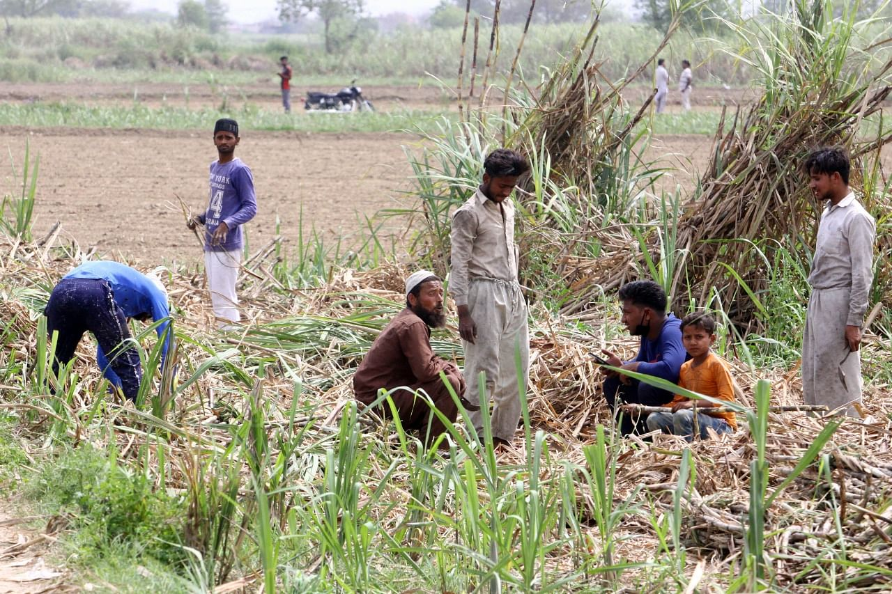 Farmer Prince Tyagi (third from right) and labourers working on his sugarcane farm in Baghpat. | Photo: Praveen Jain/ThePrint