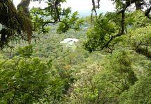 An image of a tropical rainforest