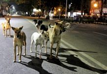Dogs on the streets of Lucknow | Photo: Praveen Jain | ThePrint