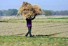 A farmer carrying wheat crop during the lockdown in Uttar Pradesh (representational image) | Photo: ANI