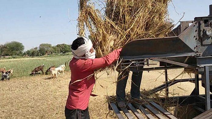 Farmers put wheat crop through a crusher in Uttar Pradesh | Photo: Samyak Pandey | ThePrint