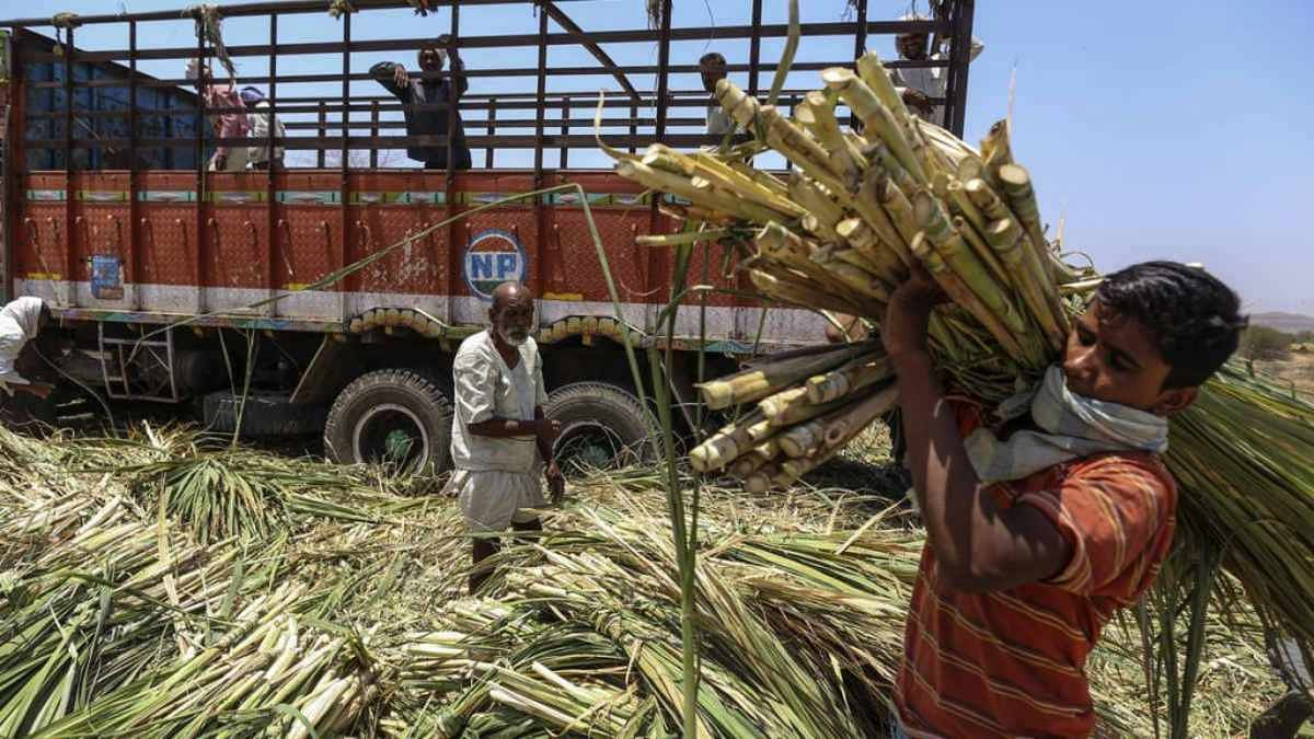 Take sugar, forget payment of dues — Yogi govt order angers sugarcane farmers