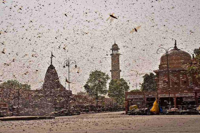 A locust swarm photographed in Jaipur earlier this week | PTI