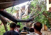 Houses get damaged as a tree gets uprooted due to strong winds after the landfall of Cyclone Nisarga. | ANI