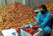 Representational image. A woman packs plums at Bhuntar, during the ongoing Covid-19 nationwide lockdown, in Kullu district. PTI