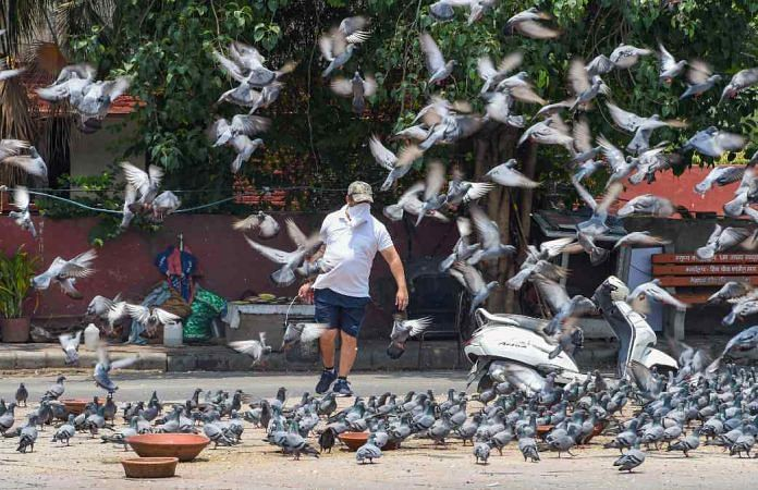 A man feeds pigeons in Delhi on Monday, the first day under new lockdown guidelines   PTI