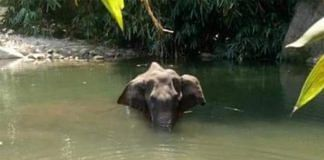 The elephant that died at Mannarkad | Facebook