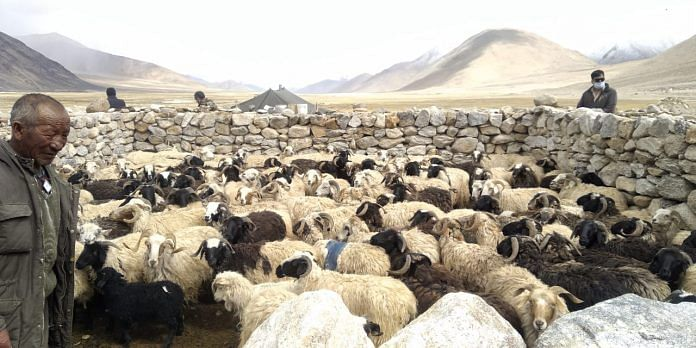 Ladakhi nomads at Chushul village along the LAC   By special arrangement