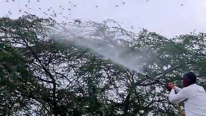 Insecticide used against locusts in Jaipur earlier this week | Representational image | ANI